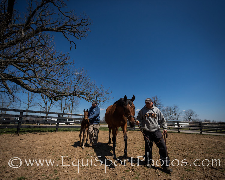 Lemon Drop Ridge & foal at Mulholland Springs Farm 4.02.2013