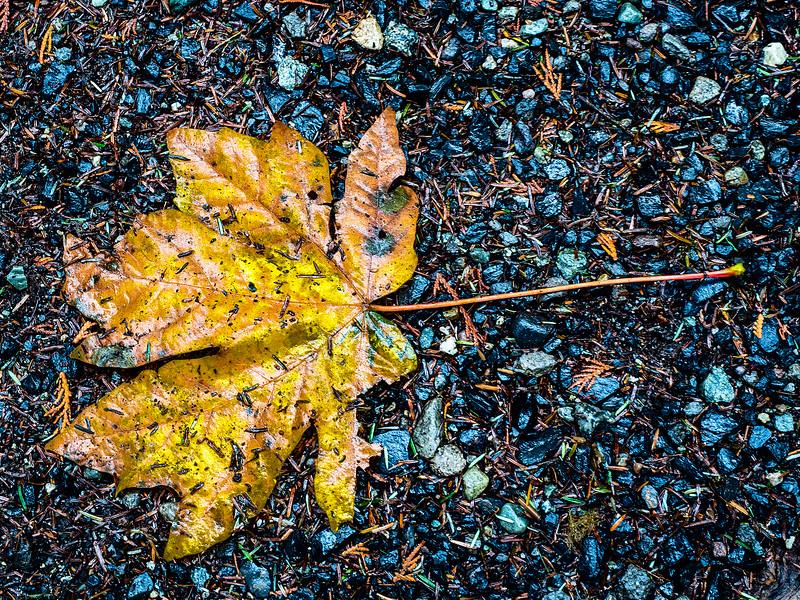 leaf on rock.jpg