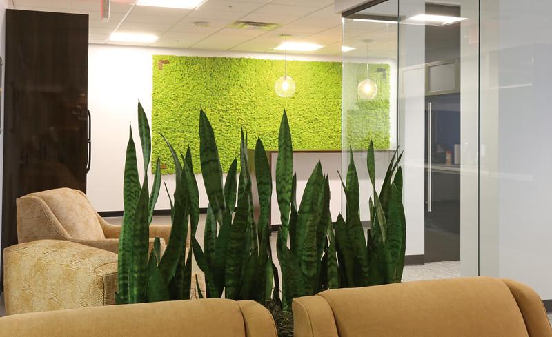Moss_wall.jpg