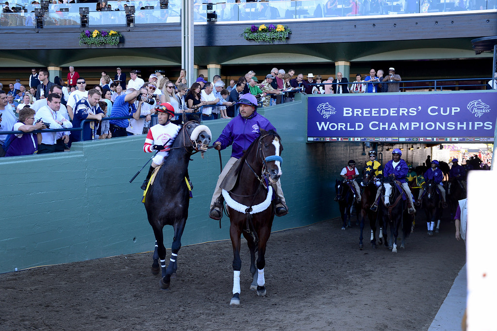 . Horses are led out for a race at the Breeders\' Cup at Santa Anita Park in Arcadia Friday, November 1, 2013. (Photo by Sarah Reingewirtz/Pasadena Star-News)