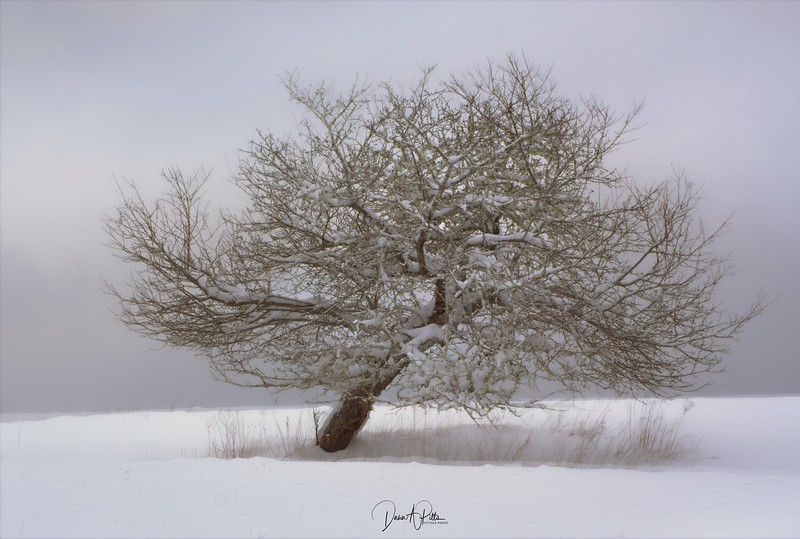 My Favourite Tree ICM