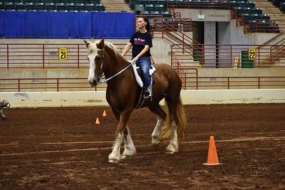 4 ld adult obstacle under saddle