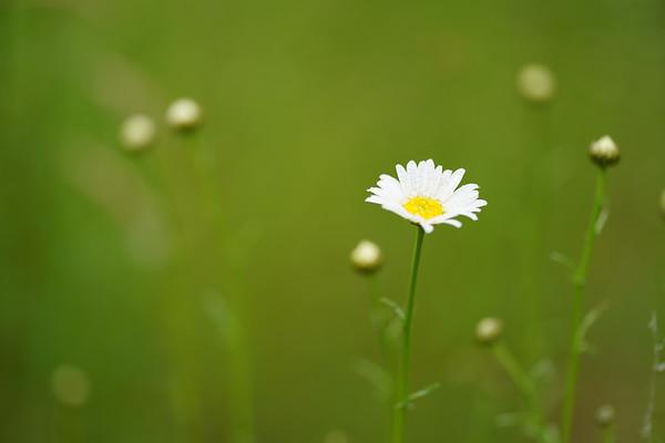 2020 Flowers