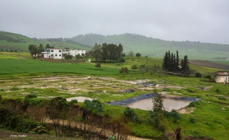 נוף ירוק 2.jpg