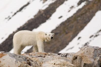 Svalbard - Wildlife
