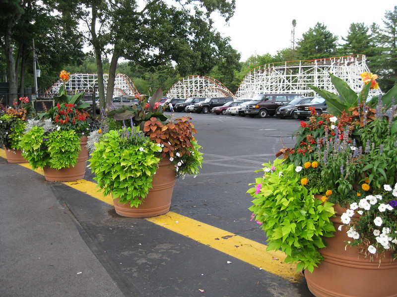 No flowers appear to be missing from these planters.