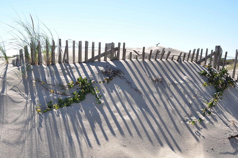 Dune Fence Shadows