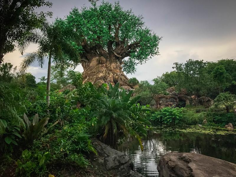 Disney World310.jpg
