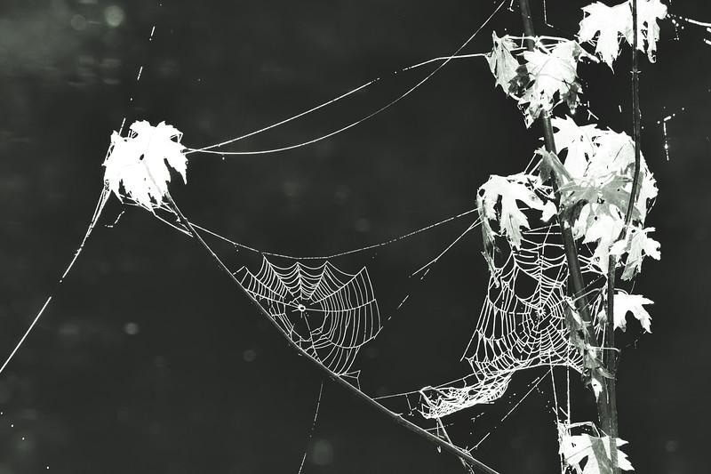 CarlSimmerman-Strings Of Pearls.jpg
