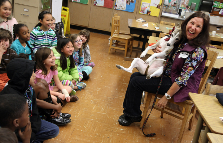 """. Sharon Tringali laughs as she shows the students in Sylviane Cohn\'s 2nd/3rd grade class how her dog Ziti, a whippet from the P.A.L.S. program, likes to sit on her lap at Joaquin Miller Elementary School in Oakland, Calif. on Feb. 15, 2013. Anya Pamplona, a Humane Advocate, brought Larry a shelter cat, and invited Ziti to visit the class as part of the \""""Drive to Thrive\"""" program. (Laura A. Oda/Staff)"""