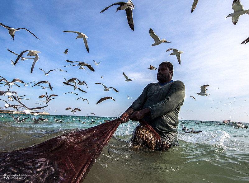 Sardine Season (17)- Dhofar.jpg