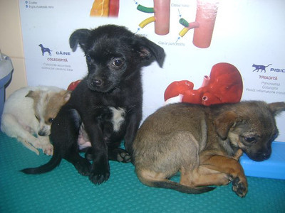 Strays in need of homes