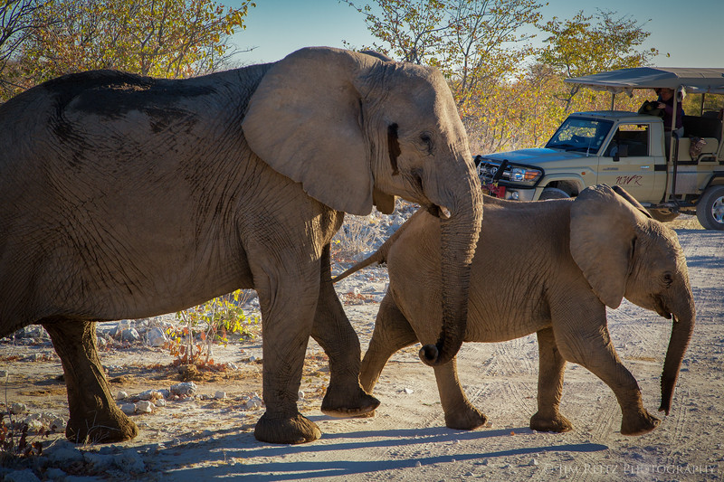 Elephant family causes a traffic jam - Etosha National Park, Namibia.