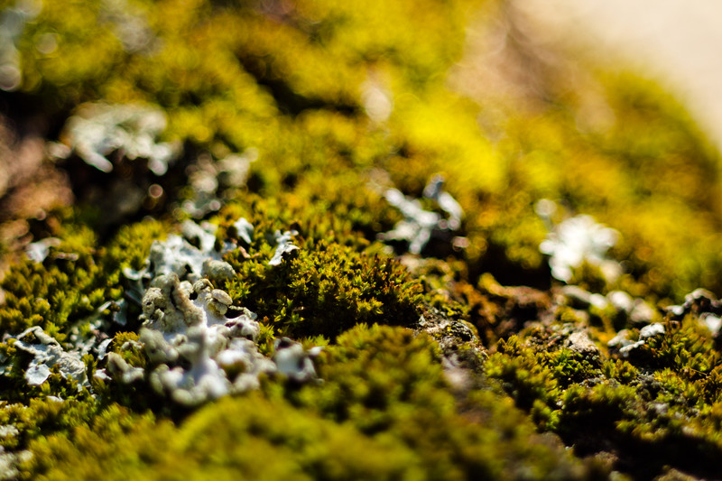 Moss on the Tree 6