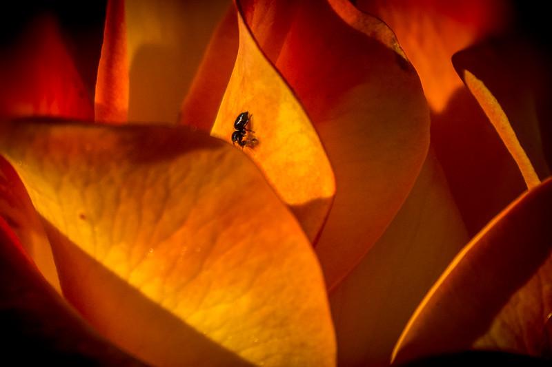 April 14 - Floral rest.jpg