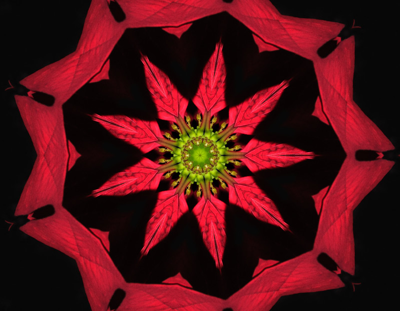 tabletop_poinsettia_00536_at_its_finest_wheel_of_fortune.jpg