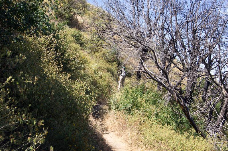 20120630025-Trailwork, MWBA, Sunset Ridge.jpg