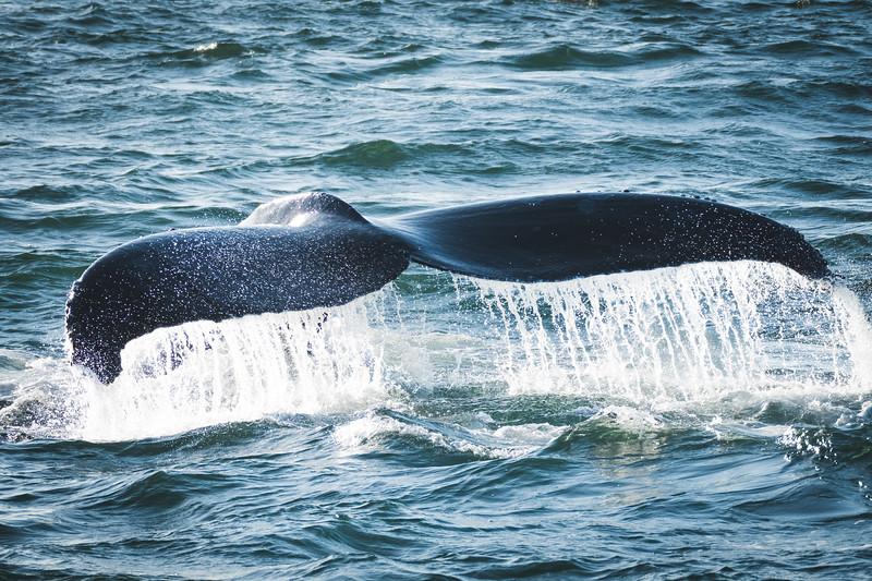 10042017_Whale_Watching-30.jpg