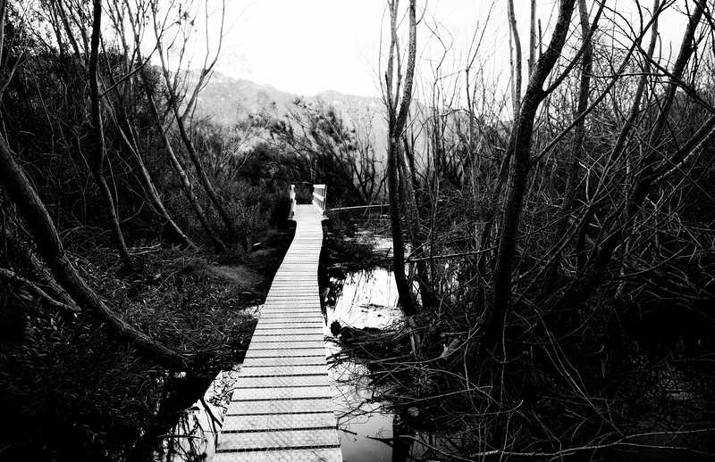 new-zealand-catlins-and-more (39 of 181)And2more_tonemapped.jpg