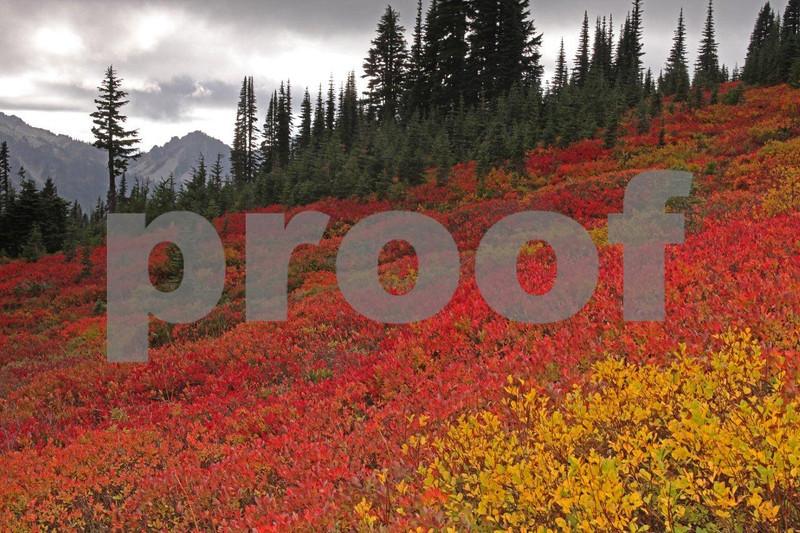 Fall color @ Paradise VC 5605.jpg