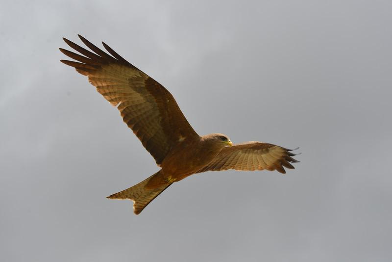 East Africa Safari 438.jpg