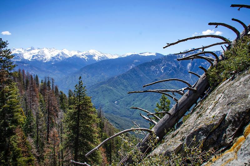 SequoiaHDR-18.jpg