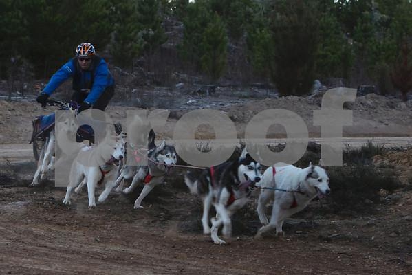 Kowen 2009 - Sunday 6 Dog Race