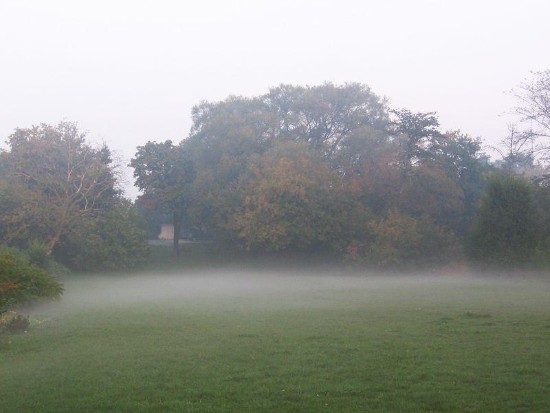 Misty Lawn