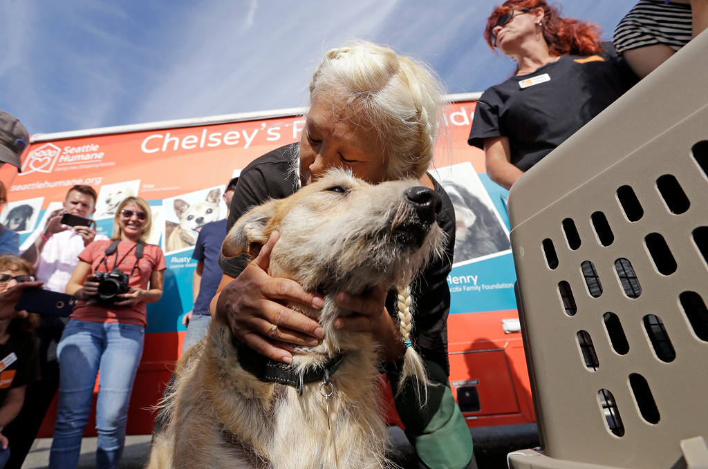 . Wings of Rescue volunteer Cathi Perez leans down to embrace rescue dog Sandy, the last of a load of 35 dogs from Texas shelters flown to make space for companion animals rescued in the Hurricane Harvey aftermath, Wednesday, Aug. 30, 2017, in Seattle. The dogs arriving in Seattle were already in Texas shelters when Harvey hit and are being transferred to Seattle-area shelters so animals displaced from the flooding can be cared for in Texas until they can be reunited with their families there. The rescue transfer is a collaboration between Humane Society of the United States, Wings of Rescue, the Progressive Animal Welfare Society (PAWS) and other Seattle-area shelters. (AP Photo/Elaine Thompson)