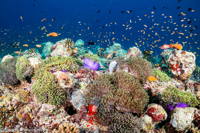 Lively Reef