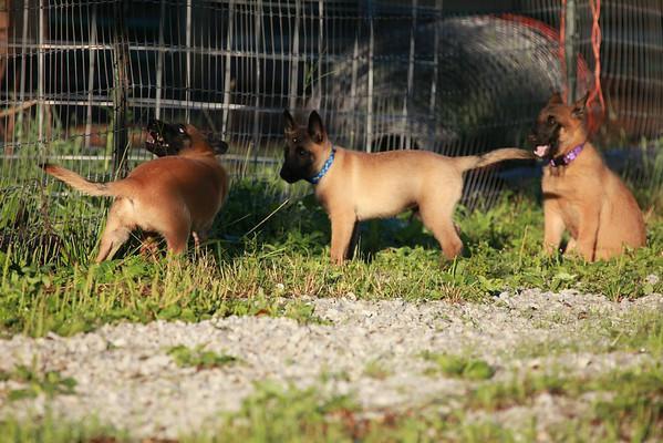 Nia puppies 8/13/2014