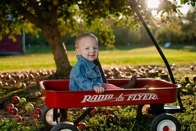 Apple Picking - Lee's Turkey Farm