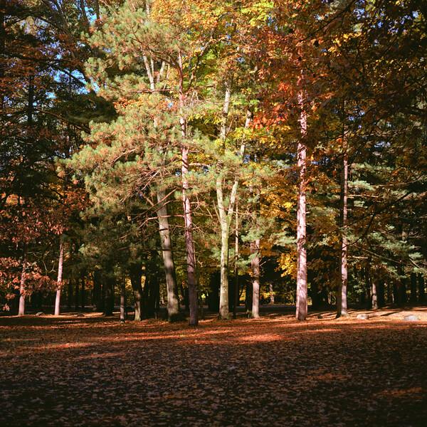 Autumn Hike 120 Film-00055.jpg