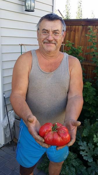 Tomatoes 2017