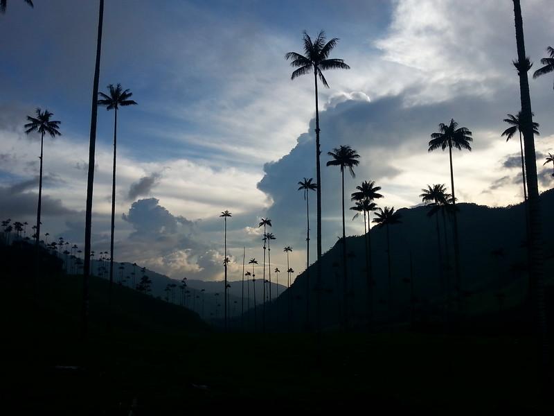 South America Adventure Cocora Valley Colombia
