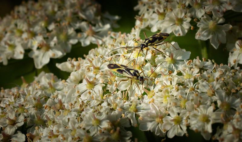 Bugs and Beetles - 50.jpg