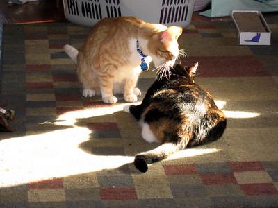 Hobbes And Hazel