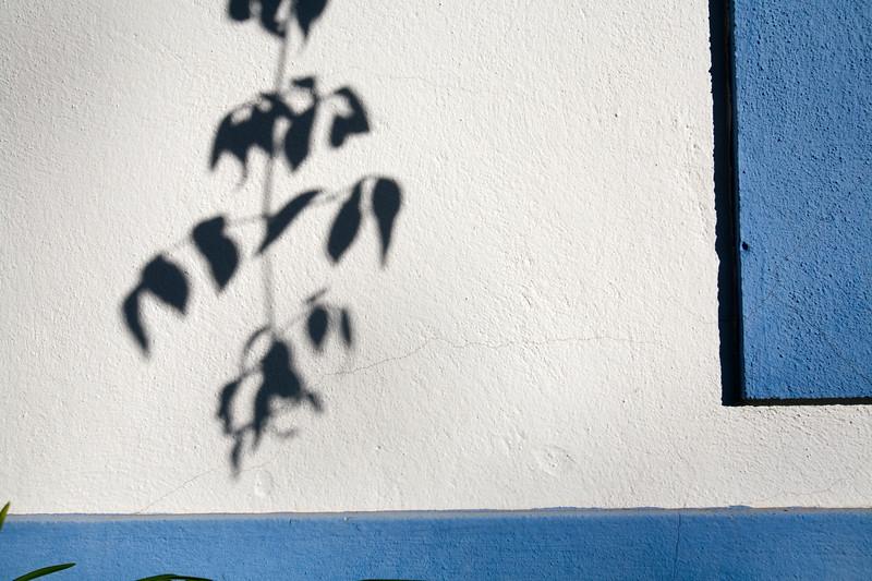 Branch shadows on a whitewashed wall, Faro, Portugal