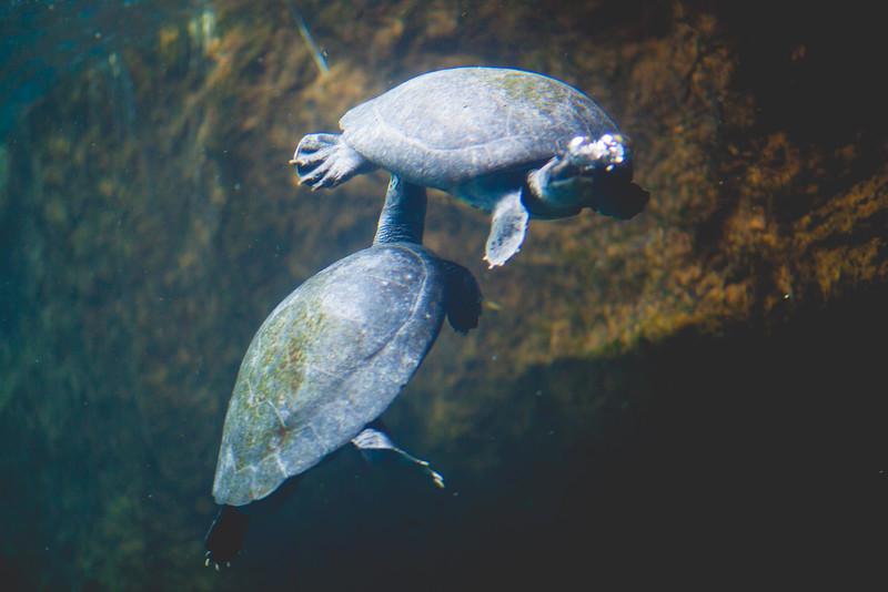 2014 10 25 Dallas World Aquarium-36.jpg