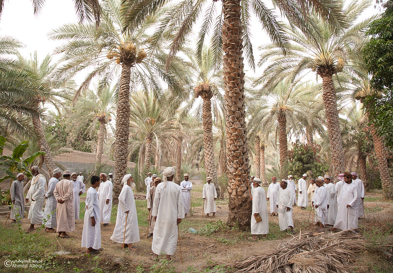 Palm Tree Auction- Mudhaibi.jpg
