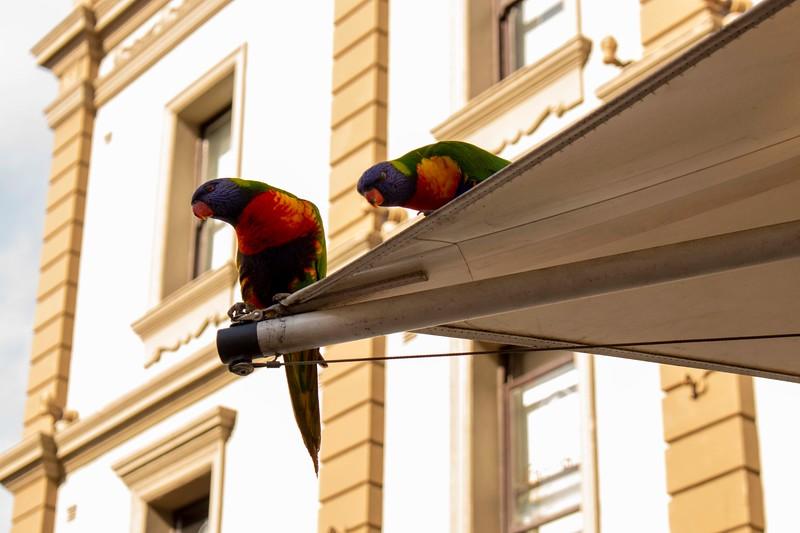 Australia_5.jpg