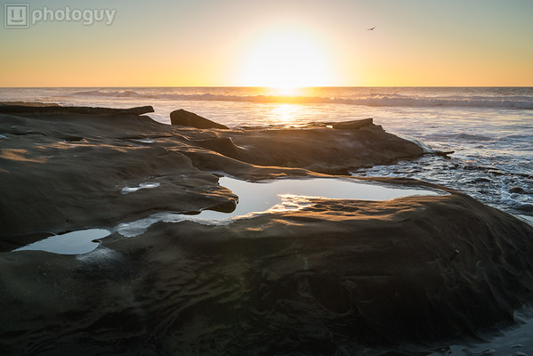 20180111_TIDE_POOLS_LA_JOLLA (3 of 16)