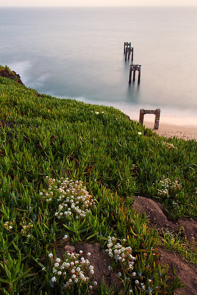 WIldflowers, Old Davenport Pier