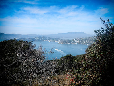 Angel Island 2014