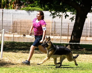 German Shepherd Dog Club of Los Angeles County - April 2013 PM Show
