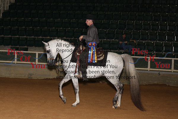 143 PB Western Pleasure Junior Horse Championship