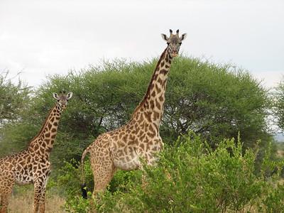 2010-7 Honeymoon Tanzania (canon)