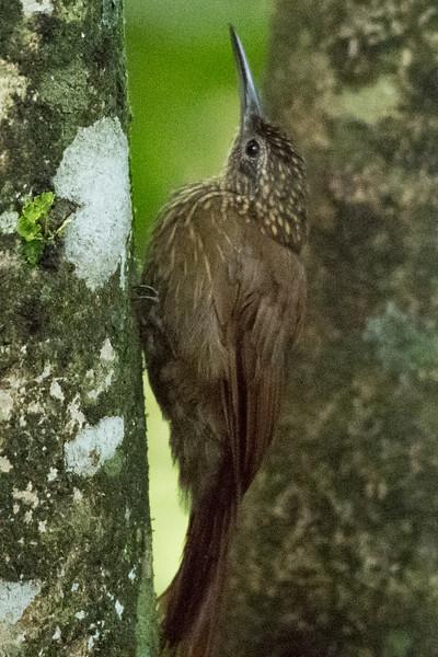 19-Sept Costa Rica Birds-2048.JPG