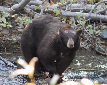 Taylor Creek Bears