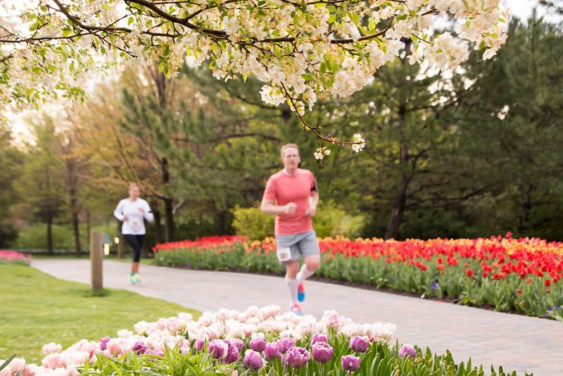 TulipFestHalfMarathon_Runners_Gardens_2015_IMG_4673.jpg